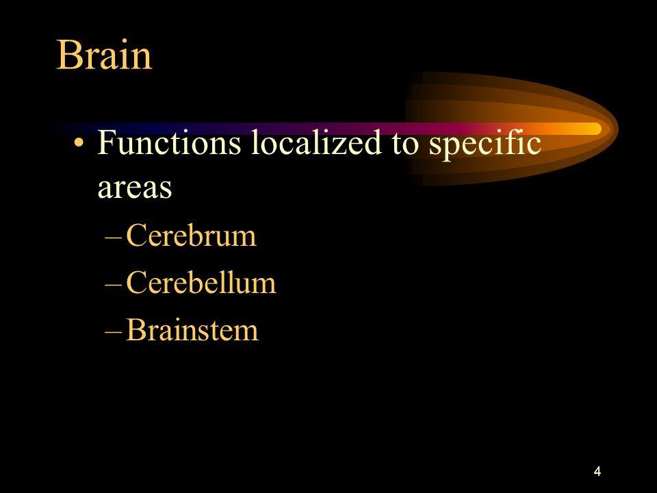 4 Brain Functions localized to specific areas –Cerebrum –Cerebellum –Brainstem