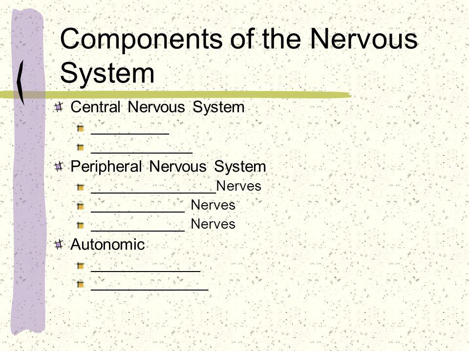 Components of the Nervous System Central Nervous System __________ _____________ Peripheral Nervous System ________________Nerves ____________ Nerves Autonomic ______________ _______________