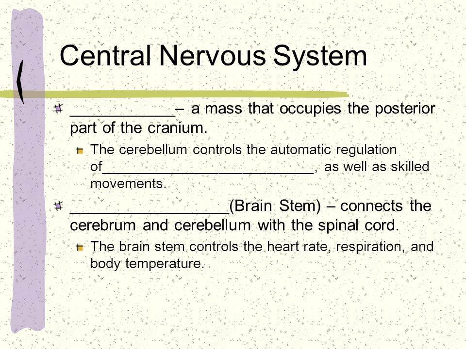 Central Nervous System ____________– a mass that occupies the posterior part of the cranium.