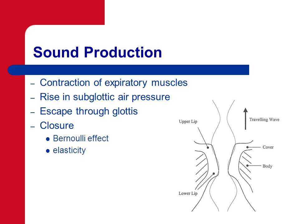 Sound Production – Contraction of expiratory muscles – Rise in subglottic air pressure – Escape through glottis – Closure Bernoulli effect elasticity