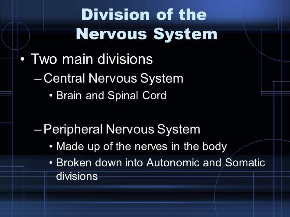 Division of the Nervous System Two main divisions –Central Nervous System Brain and Spinal Cord –Peripheral Nervous System Made up of the nerves in th