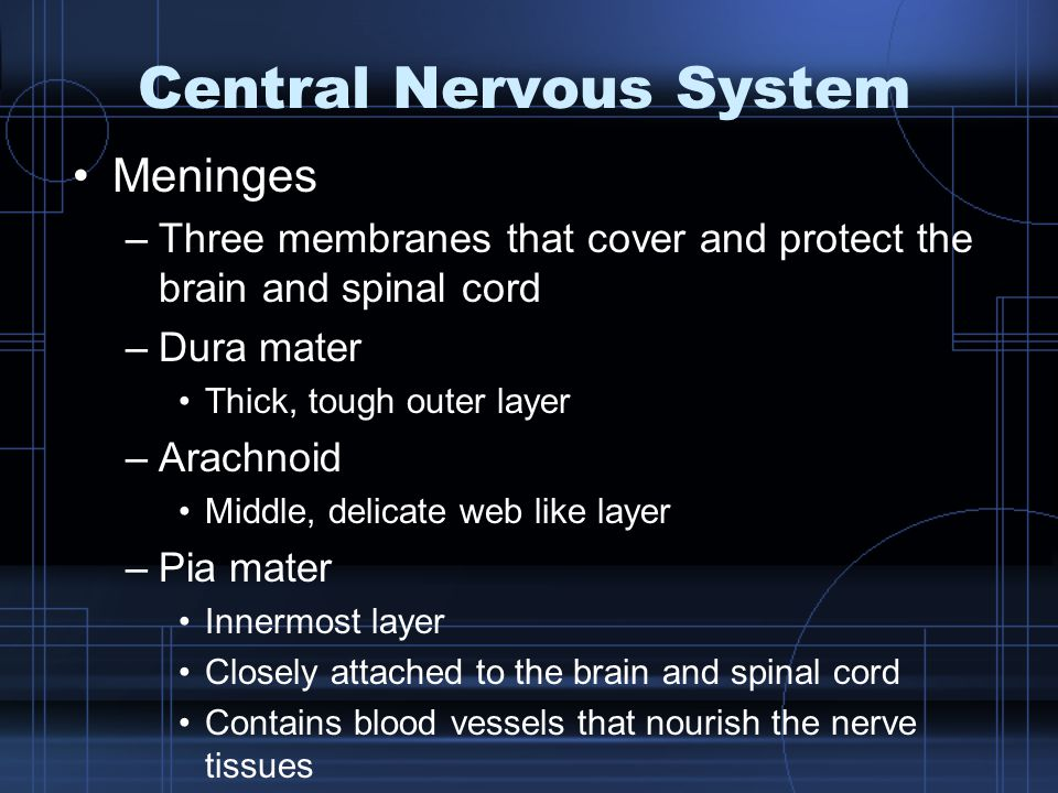 Central Nervous System Meninges –Three membranes that cover and protect the brain and spinal cord –Dura mater Thick, tough outer layer –Arachnoid Midd