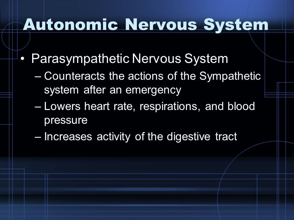 Autonomic Nervous System Parasympathetic Nervous System –Counteracts the actions of the Sympathetic system after an emergency –Lowers heart rate, respirations, and blood pressure –Increases activity of the digestive tract