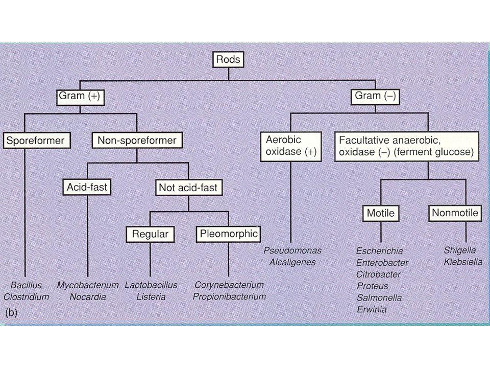 Neonatal tetanus