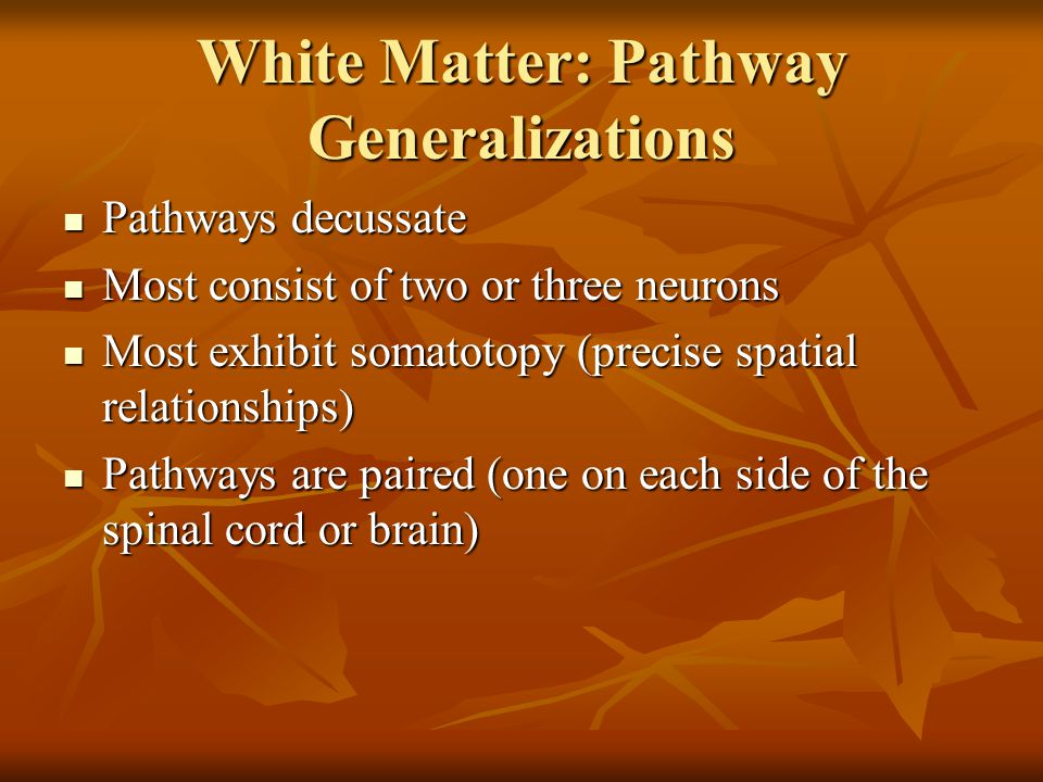 White Matter: Pathway Generalizations Pathways decussate Pathways decussate Most consist of two or three neurons Most consist of two or three neurons