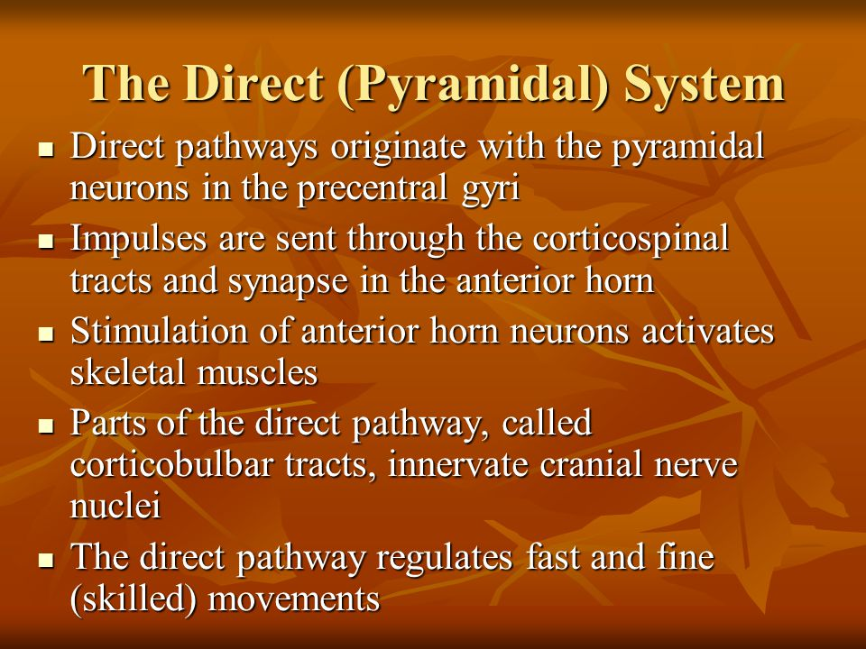 The Direct (Pyramidal) System Direct pathways originate with the pyramidal neurons in the precentral gyri Direct pathways originate with the pyramidal