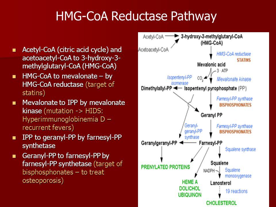 Acetyl-CoA (citric acid cycle) and acetoacetyl-CoA to 3-hydroxy-3- methylglutaryl-CoA (HMG-CoA) Acetyl-CoA (citric acid cycle) and acetoacetyl-CoA to