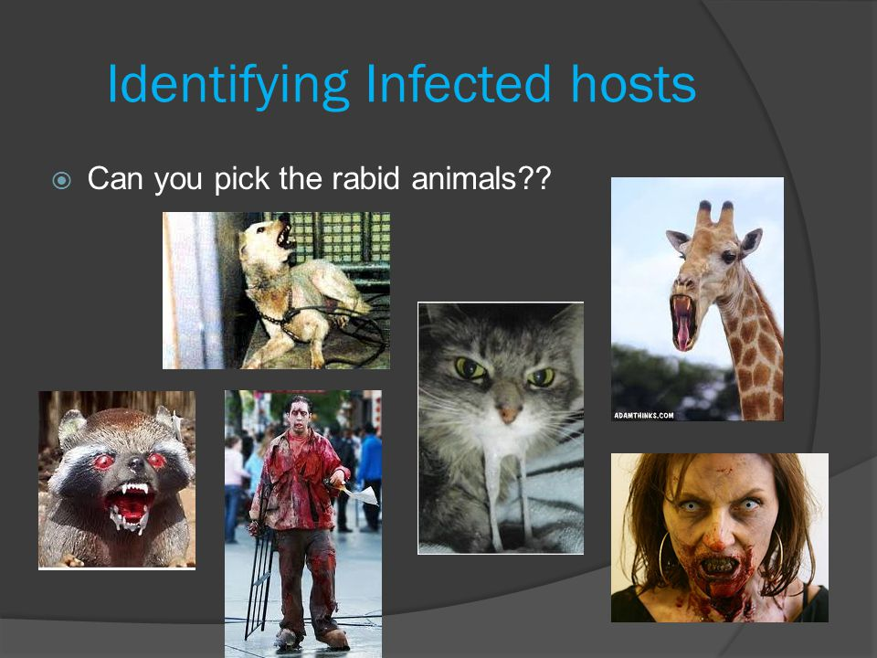 Identifying Infected hosts  Can you pick the rabid animals??