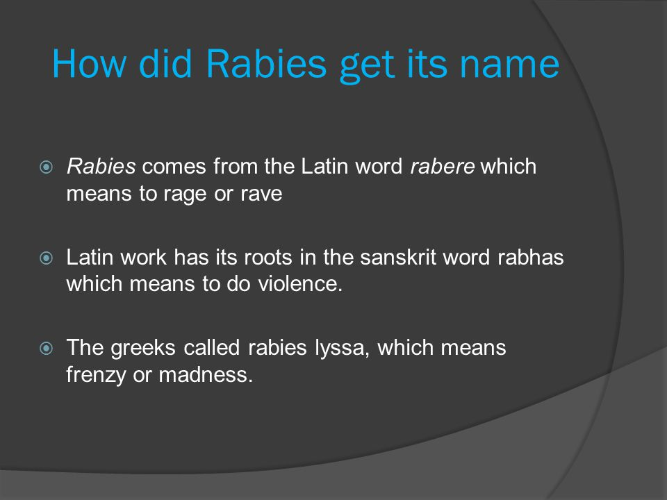 How did Rabies get its name  Rabies comes from the Latin word rabere which means to rage or rave  Latin work has its roots in the sanskrit word rabh
