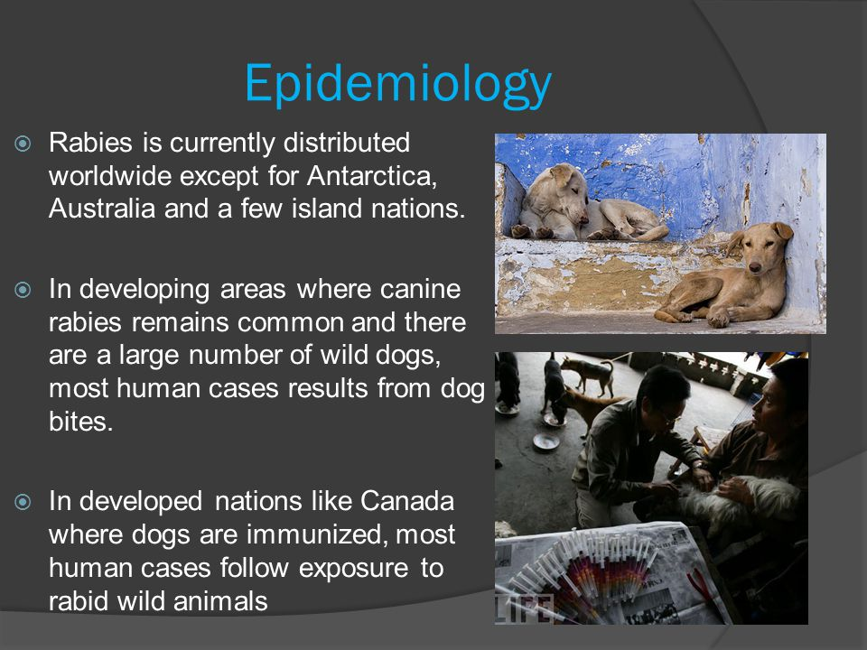 Epidemiology  Rabies is currently distributed worldwide except for Antarctica, Australia and a few island nations.  In developing areas where canine