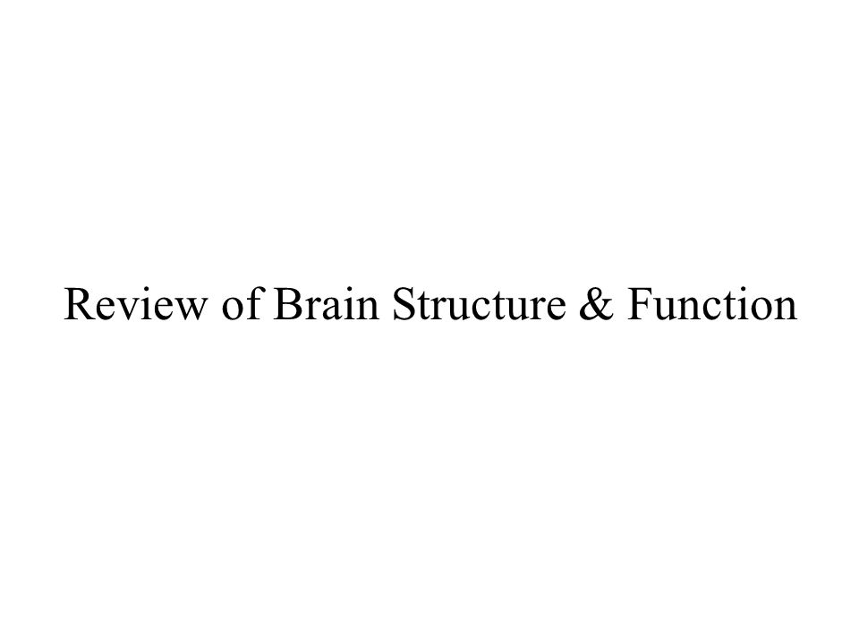 Cerebral Cortex –Divided into Hemispheres –Functions Motor - Controlling voluntary movements Sensory - Registers and processing sensations Association - Higher mental functions Language - Comprehension and Production