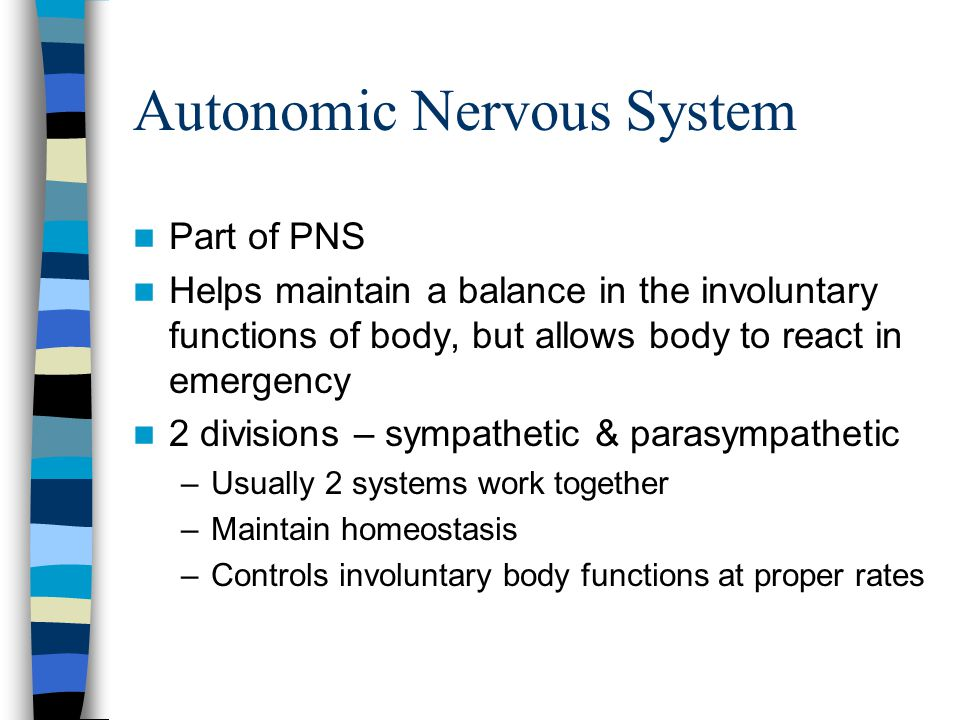 Autonomic Nervous System Part of PNS Helps maintain a balance in the involuntary functions of body, but allows body to react in emergency 2 divisions