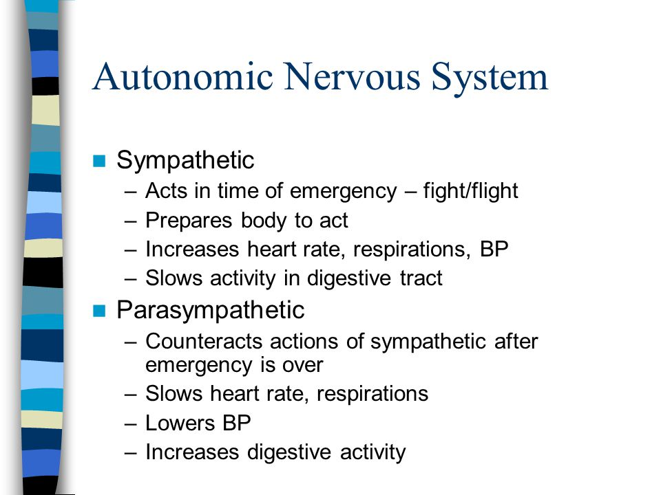 Autonomic Nervous System Sympathetic –Acts in time of emergency – fight/flight –Prepares body to act –Increases heart rate, respirations, BP –Slows ac