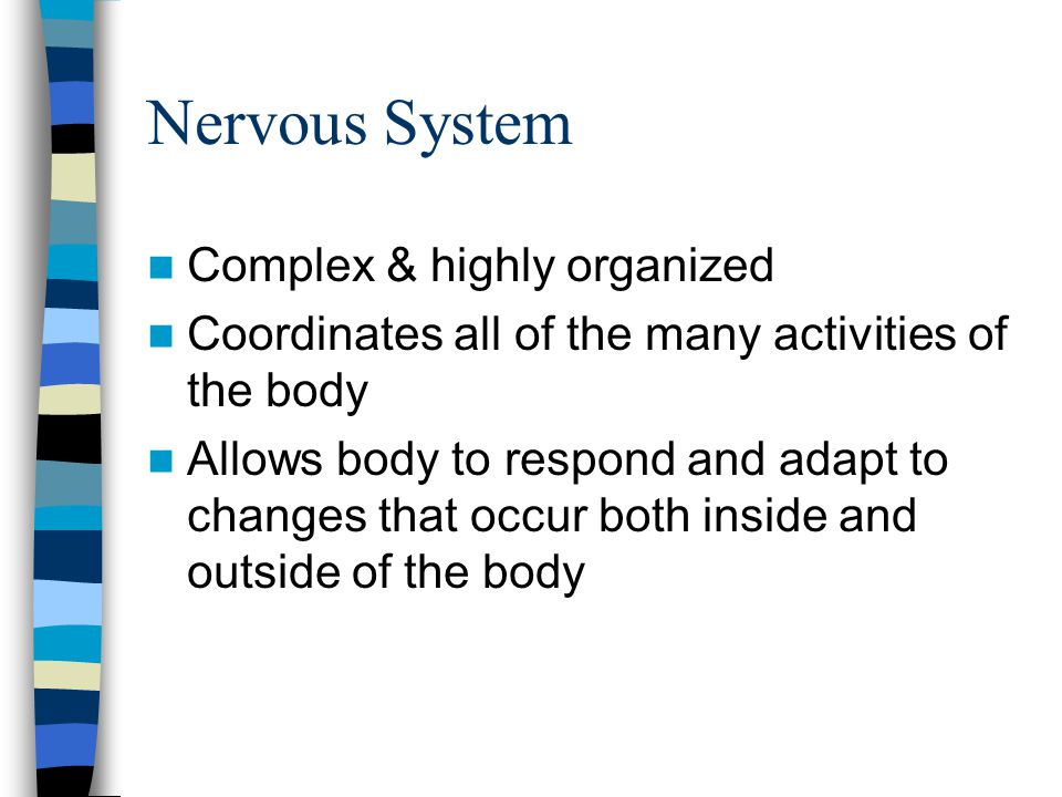 Complex & highly organized Coordinates all of the many activities of the body Allows body to respond and adapt to changes that occur both inside and o