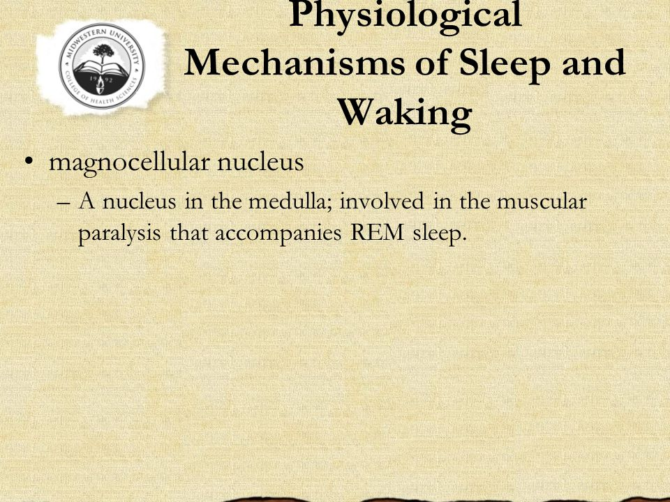 Physiological Mechanisms of Sleep and Waking magnocellular nucleus –A nucleus in the medulla; involved in the muscular paralysis that accompanies REM sleep.