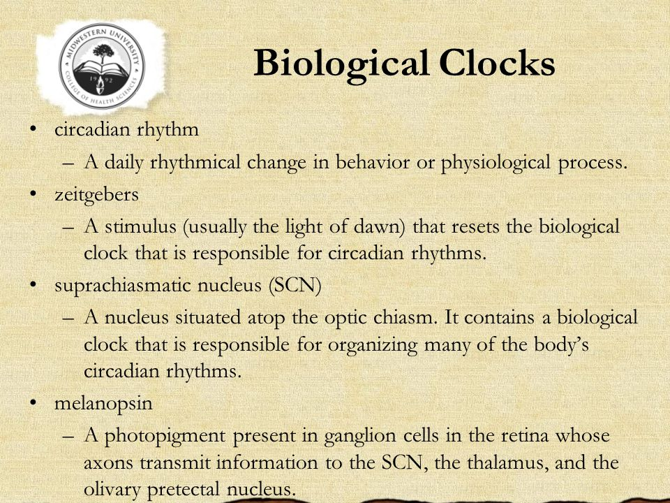 Biological Clocks circadian rhythm –A daily rhythmical change in behavior or physiological process.