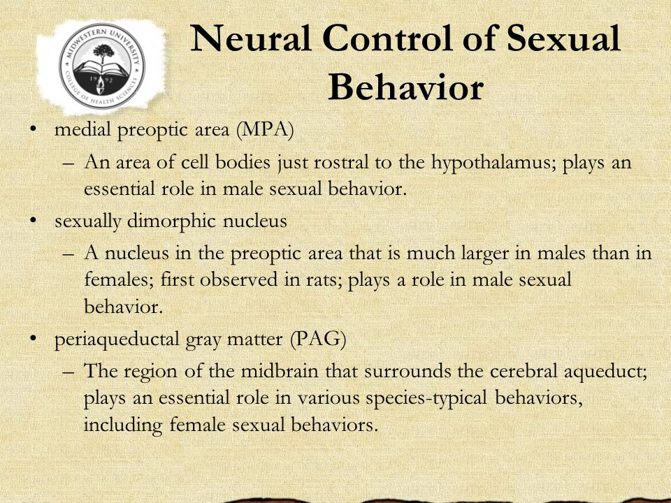 Neural Control of Sexual Behavior medial preoptic area (MPA) –An area of cell bodies just rostral to the hypothalamus; plays an essential role in male sexual behavior.
