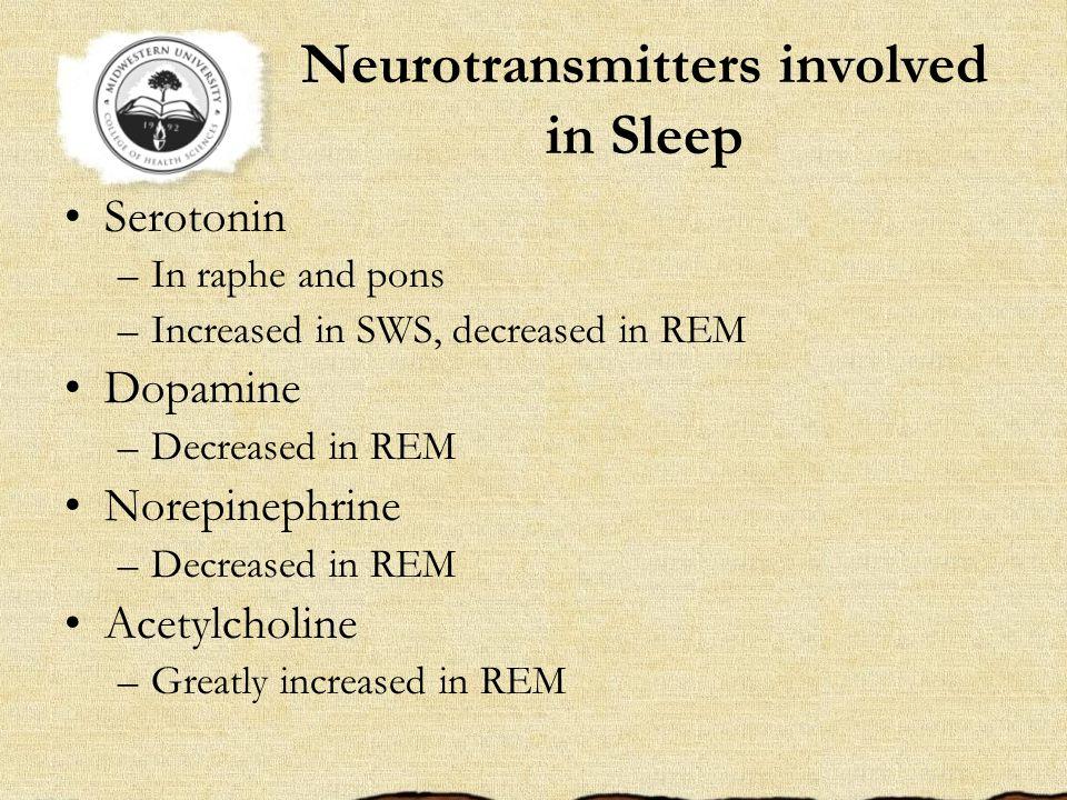 Neurotransmitters involved in Sleep Serotonin –In raphe and pons –Increased in SWS, decreased in REM Dopamine –Decreased in REM Norepinephrine –Decreased in REM Acetylcholine –Greatly increased in REM