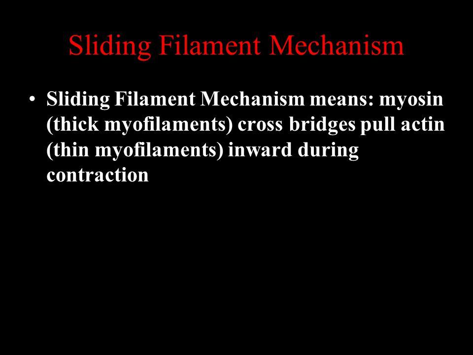 Sliding Filament Mechanism Sliding Filament Mechanism means: myosin (thick myofilaments) cross bridges pull actin (thin myofilaments) inward during contraction