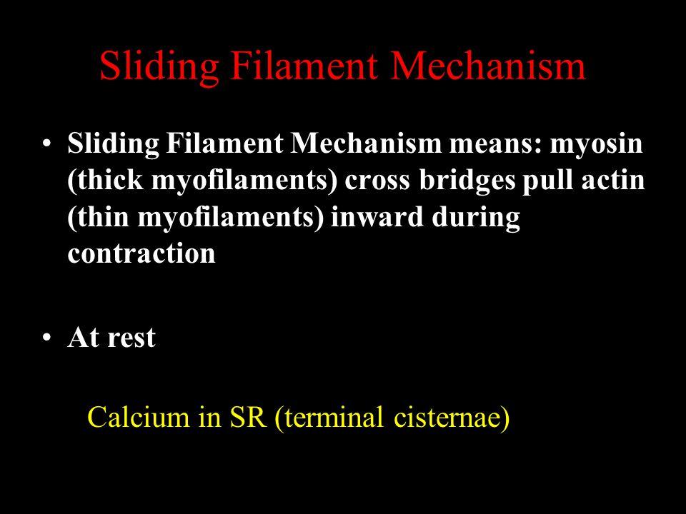 Sliding Filament Mechanism Sliding Filament Mechanism means: myosin (thick myofilaments) cross bridges pull actin (thin myofilaments) inward during contraction Calcium in SR (terminal cisternae) At rest