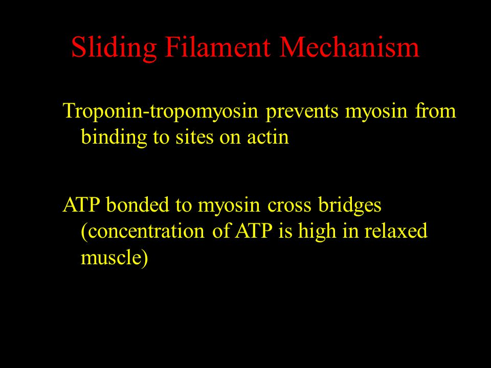 Sliding Filament Mechanism Troponin-tropomyosin prevents myosin from binding to sites on actin ATP bonded to myosin cross bridges (concentration of ATP is high in relaxed muscle)