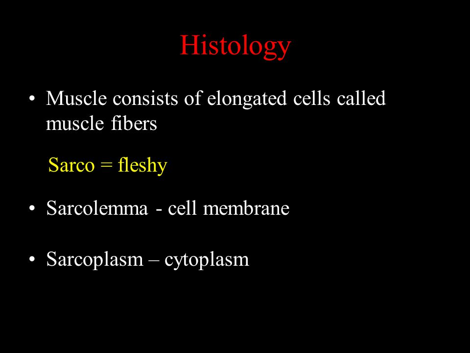 Histology Sarco = fleshy Muscle consists of elongated cells called muscle fibers Sarcolemma - cell membrane Sarcoplasm – cytoplasm