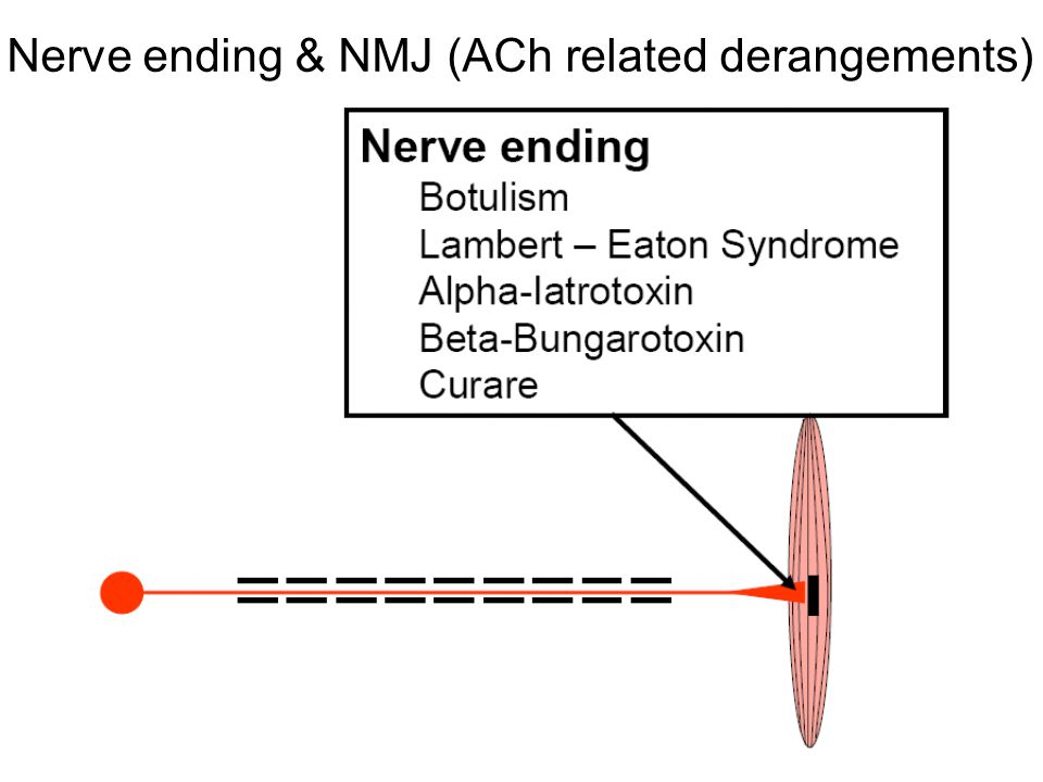 Nerve ending & NMJ (ACh related derangements)