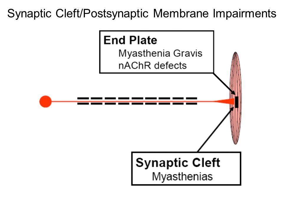 Synaptic Cleft/Postsynaptic Membrane Impairments