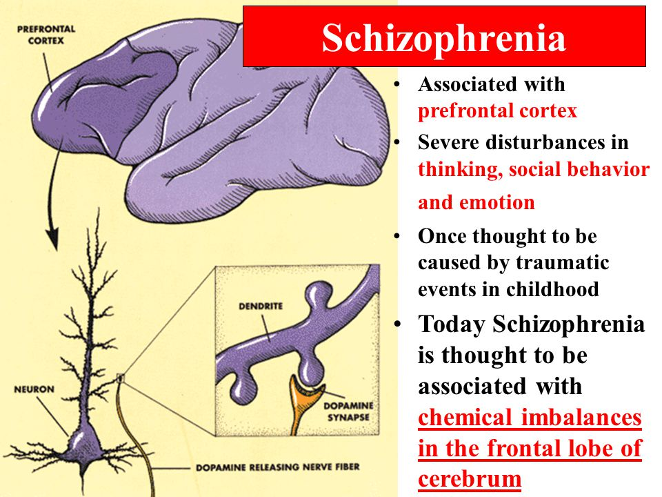 Associated with prefrontal cortex Severe disturbances in thinking, social behavior and emotion Once thought to be caused by traumatic events in childhood Today Schizophrenia is thought to be associated with chemical imbalances in the frontal lobe of cerebrum Schizophrenia