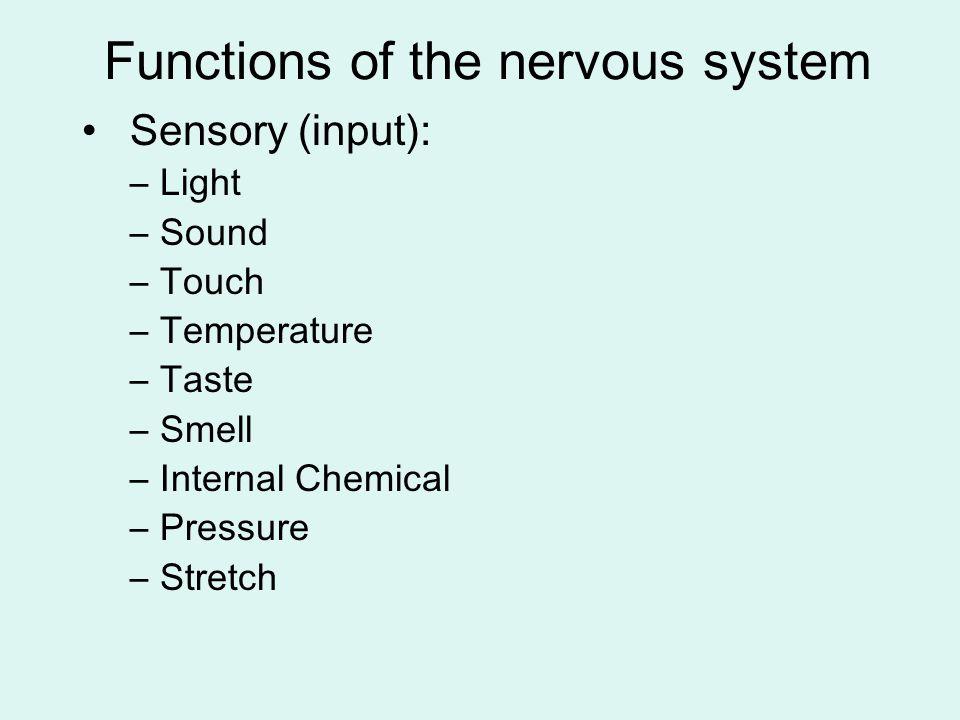 Functions of the nervous system (cont'd) Integration: –Integration means making sense of sensory input.