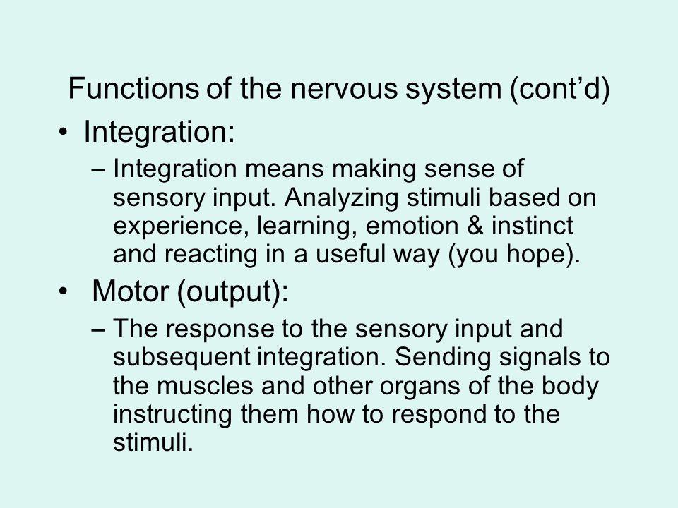 Complexity Complexity of neural circuit: –monosynaptic reflex: sensory neuron synapses directly onto motor neuron –polysynaptic reflex: at least 1 interneuron between sensory neuron and motor neuron