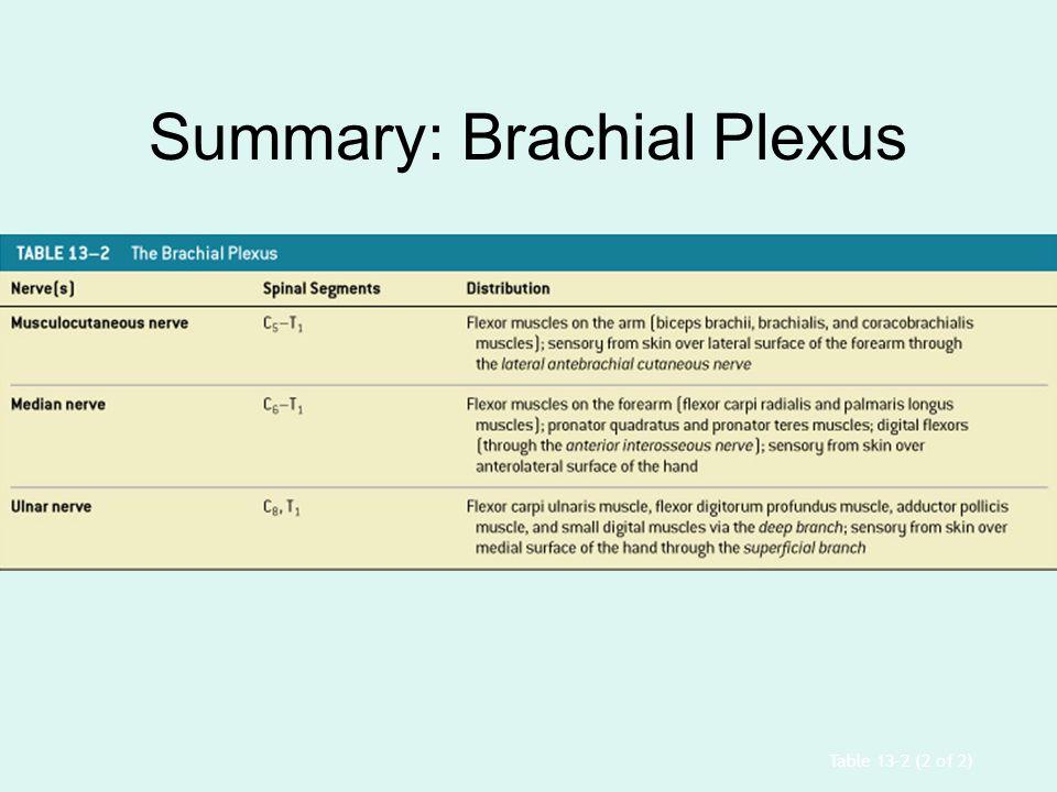 Table 13–2 (2 of 2) Summary: Brachial Plexus