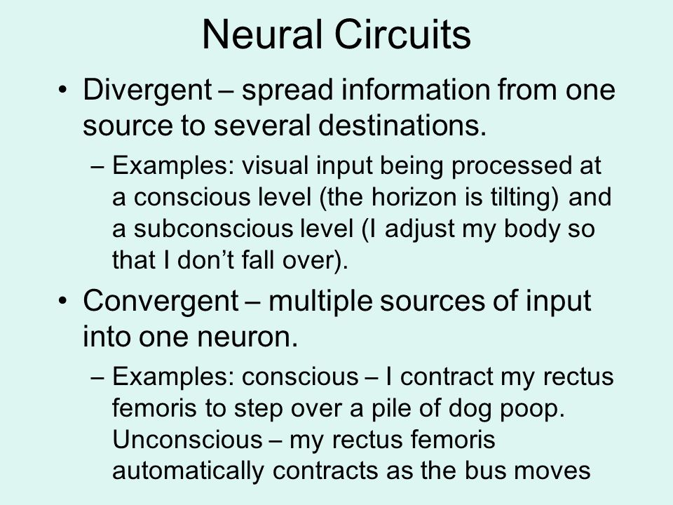 Neural Circuits Divergent – spread information from one source to several destinations. –Examples: visual input being processed at a conscious level (