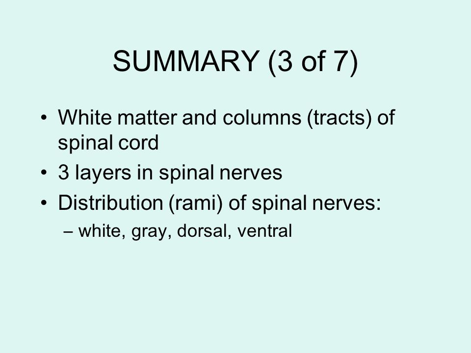 SUMMARY (3 of 7) White matter and columns (tracts) of spinal cord 3 layers in spinal nerves Distribution (rami) of spinal nerves: –white, gray, dorsal