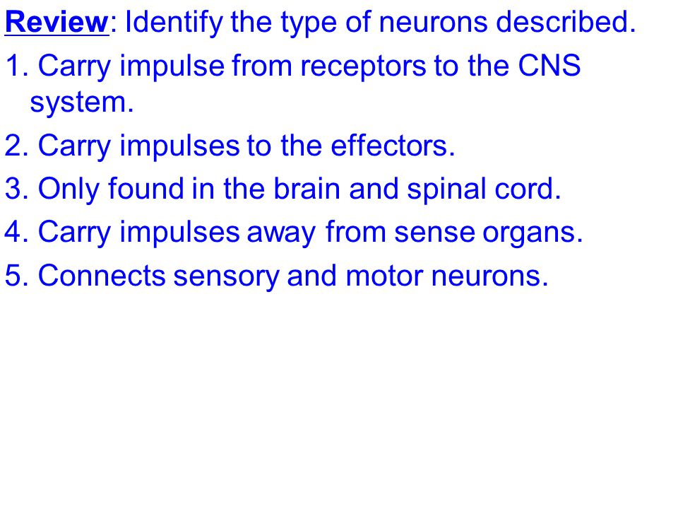 Review: Identify the type of neurons described. 1.
