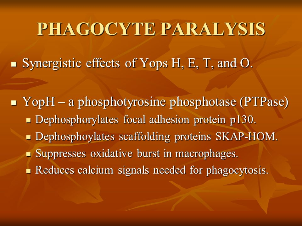 PHAGOCYTE PARALYSIS Synergistic effects of Yops H, E, T, and O.