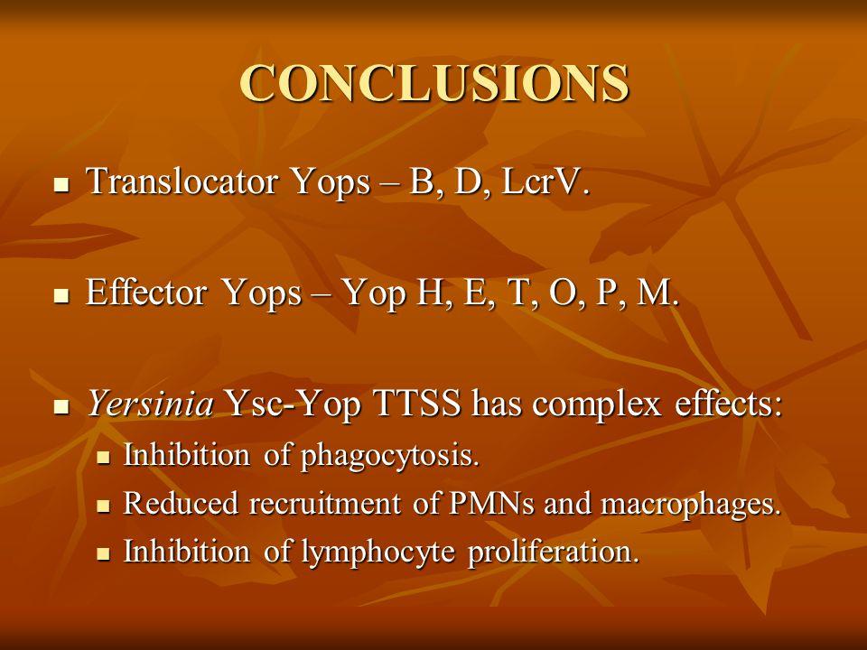 CONCLUSIONS Translocator Yops – B, D, LcrV. Translocator Yops – B, D, LcrV.