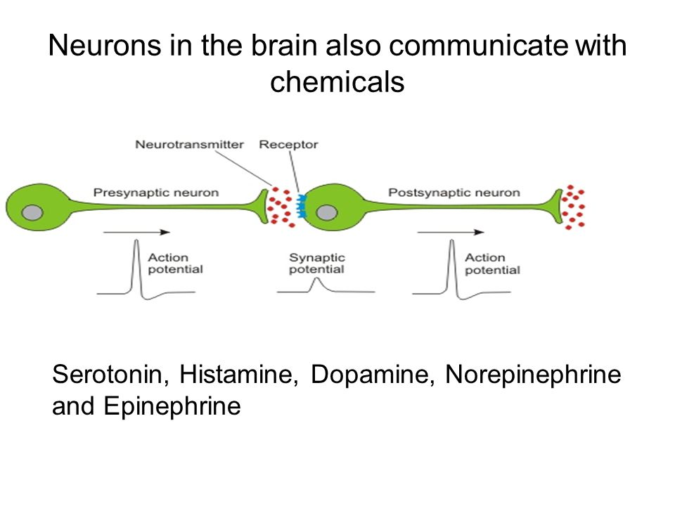 Neurons in the brain also communicate with chemicals Serotonin, Histamine, Dopamine, Norepinephrine and Epinephrine