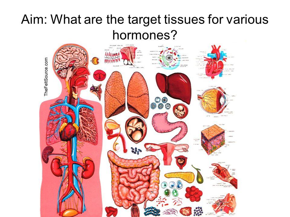 Hypothalamus The hypothalamus makes hormones that control the pituitary gland.