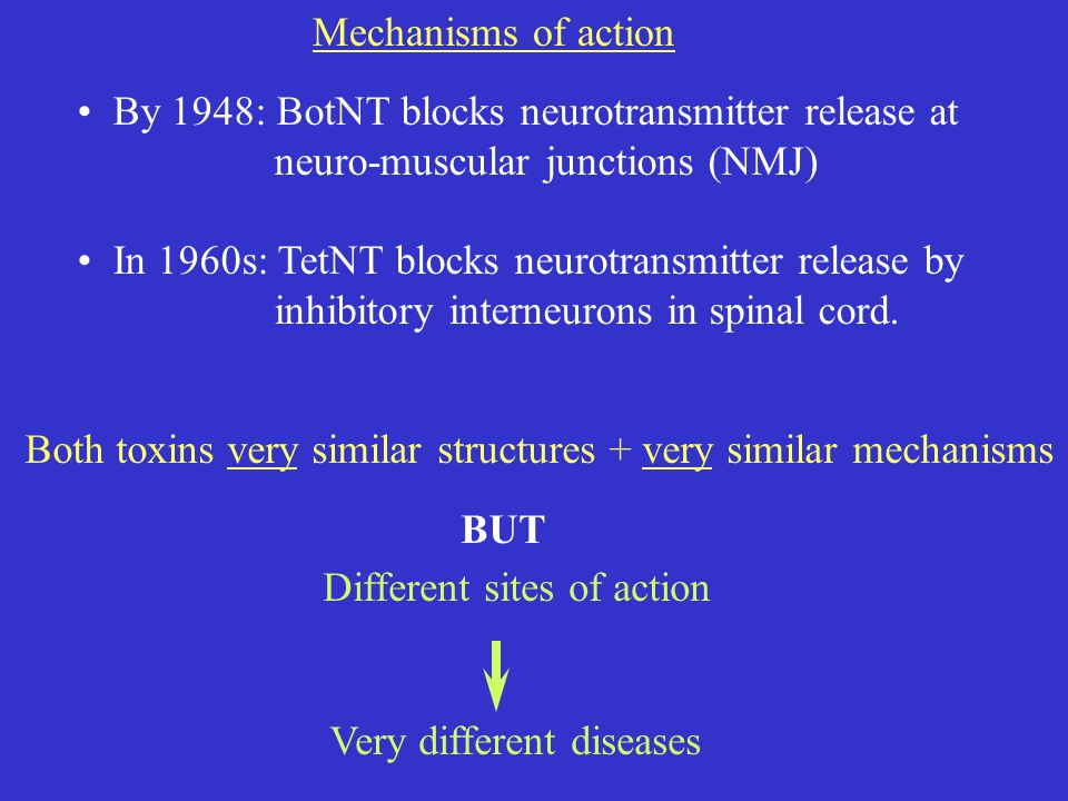 Mechanisms of action By 1948: BotNT blocks neurotransmitter release at neuro-muscular junctions (NMJ) In 1960s: TetNT blocks neurotransmitter release by inhibitory interneurons in spinal cord.