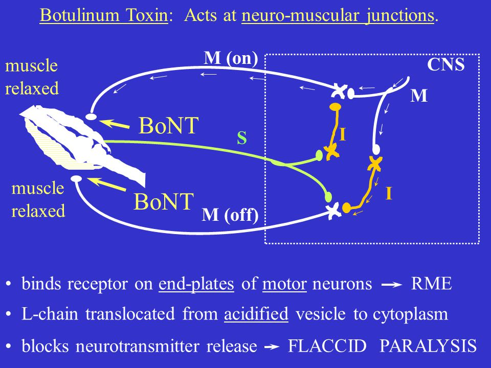 muscle relaxed muscle relaxed M (on) M (off) I I M S CNS Botulinum Toxin: Acts at neuro-muscular junctions.