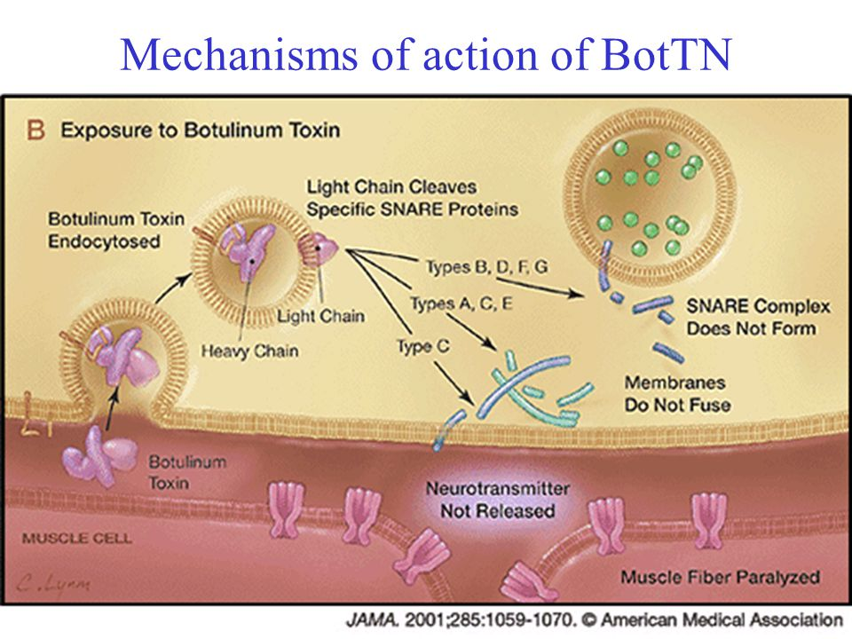 Mechanisms of action of BotTN