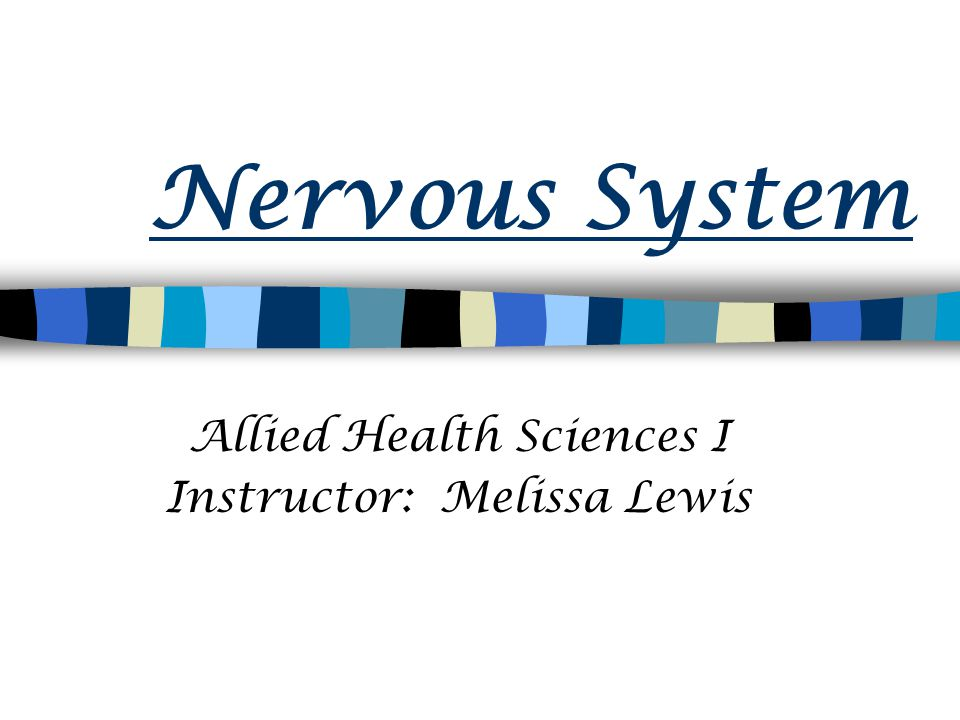 Nervous System Allied Health Sciences I Instructor: Melissa Lewis