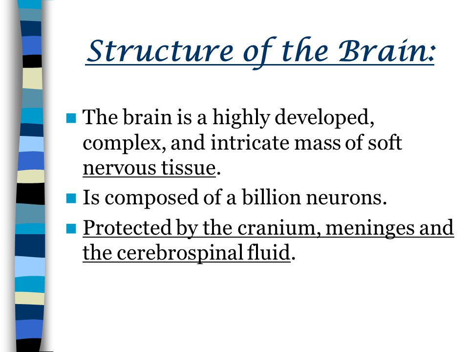 Structure of the Brain: The brain is a highly developed, complex, and intricate mass of soft nervous tissue.
