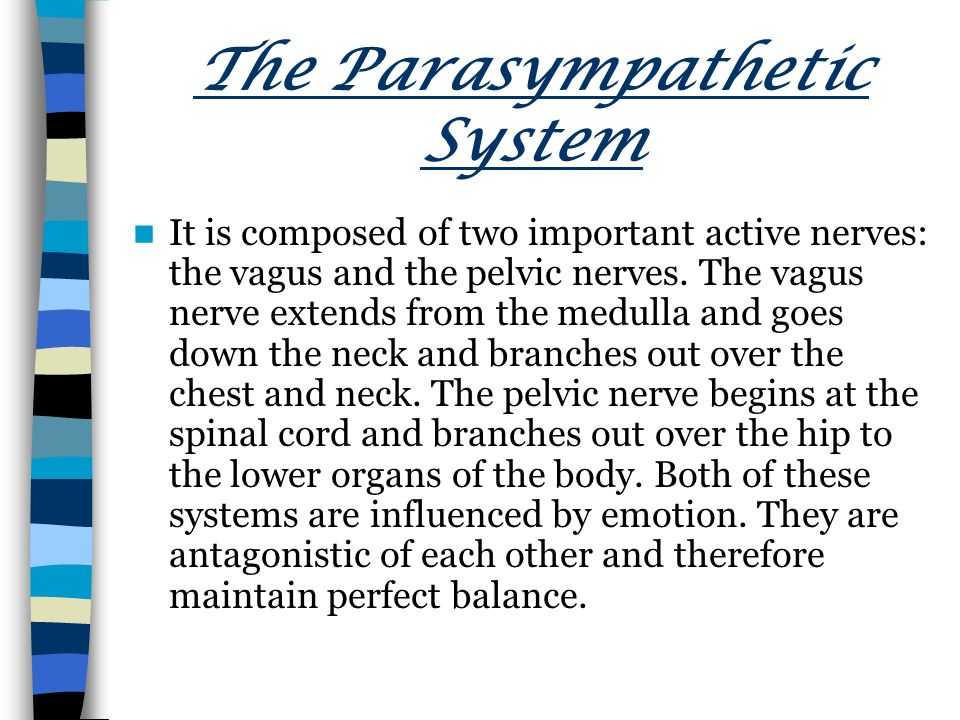 The Parasympathetic System It is composed of two important active nerves: the vagus and the pelvic nerves.