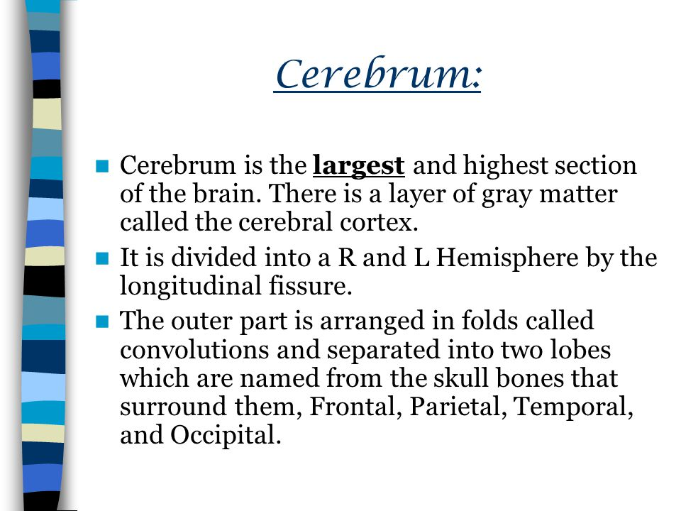Cerebrum: Cerebrum is the largest and highest section of the brain.