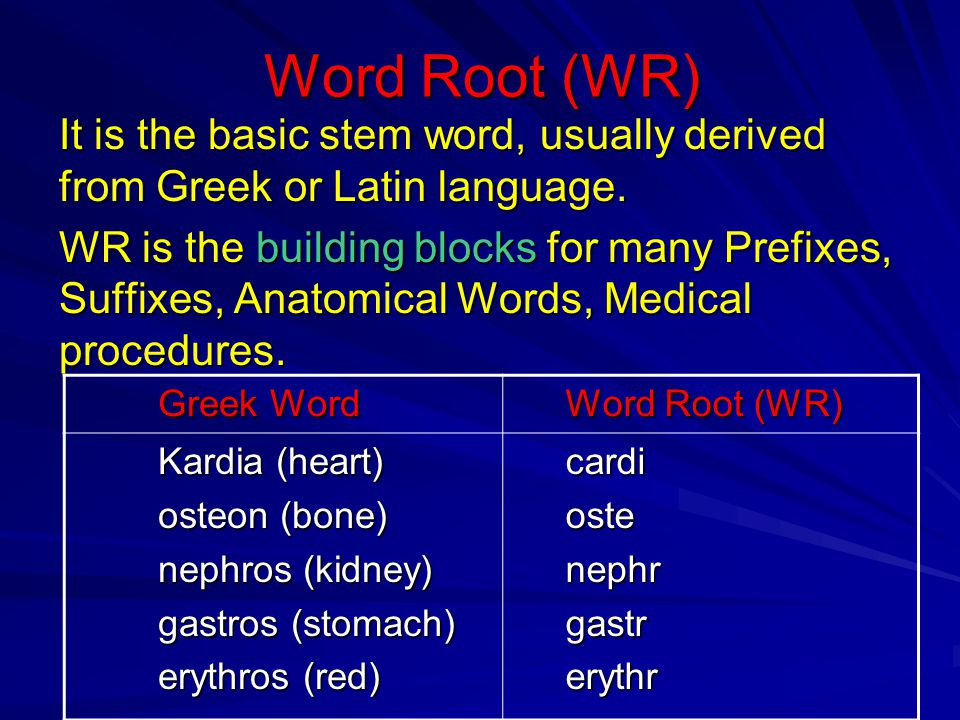 Word Root (WR) It is the basic stem word, usually derived from Greek or Latin language. WR is the building blocks for many Prefixes, Suffixes, Anatomi