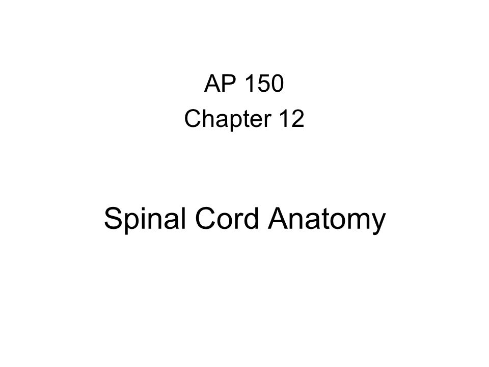 Spinal Cord Anatomy AP 150 Chapter 12
