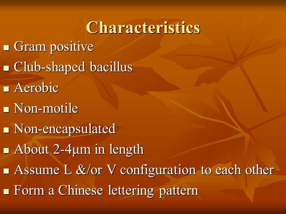 Characteristics Gram positive Gram positive Club-shaped bacillus Club-shaped bacillus Aerobic Aerobic Non-motile Non-motile Non-encapsulated Non-encap