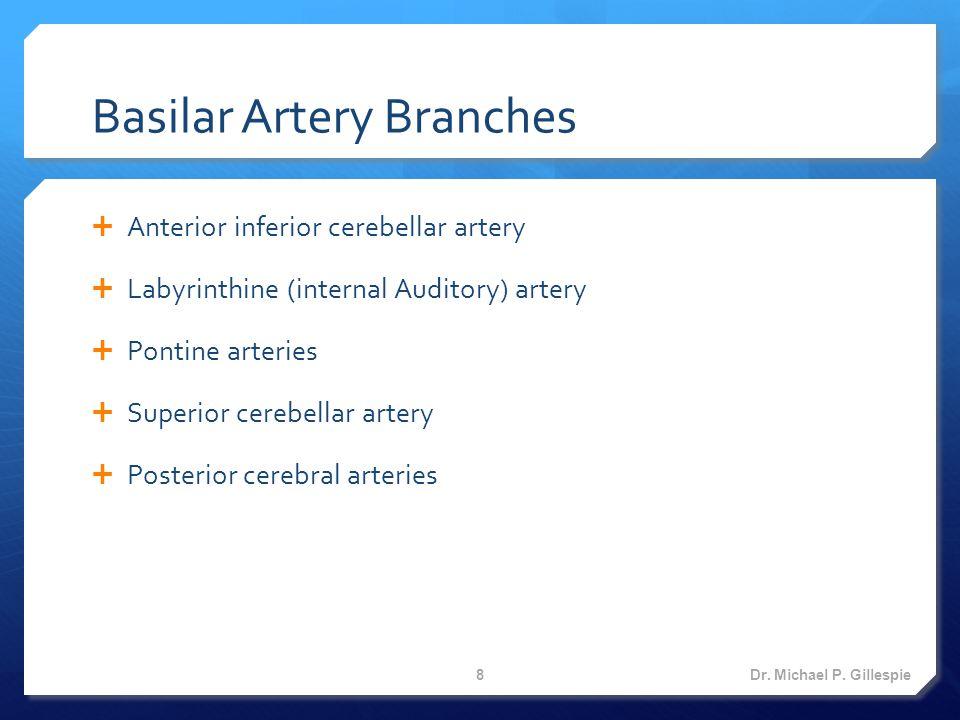Cerebral Arterial Circle (Circle of Willis) Dr. Michael P. Gillespie 9